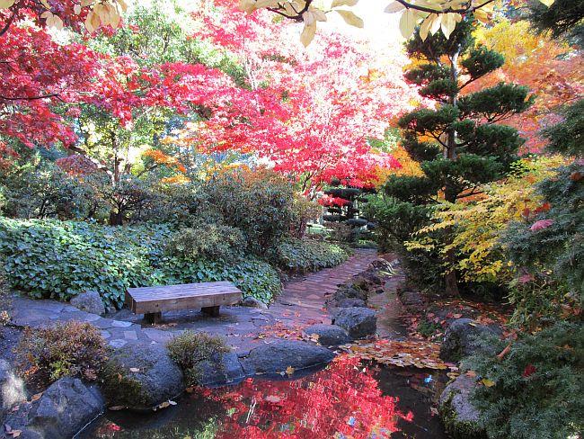 Lithia Park Fall 2013 Photo Marnie Hancock