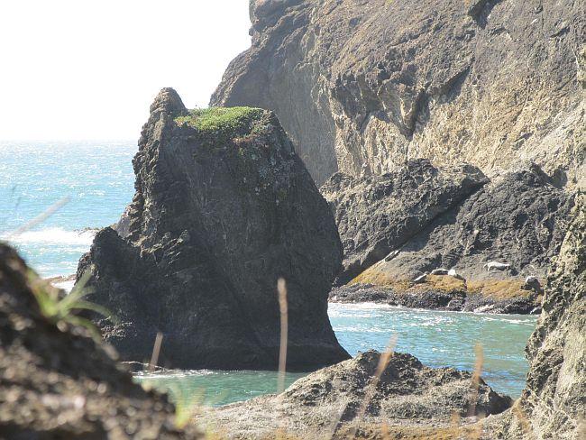 Many Seals At Secret, Paradise Cove, The Oregon Coast