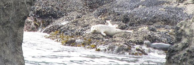 IMG_0311 White Seals Original Cropped Resized